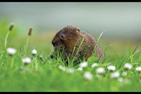 First catch your vole